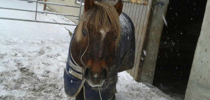 Pferd im Schnee auf dem Ferienhof Langballig