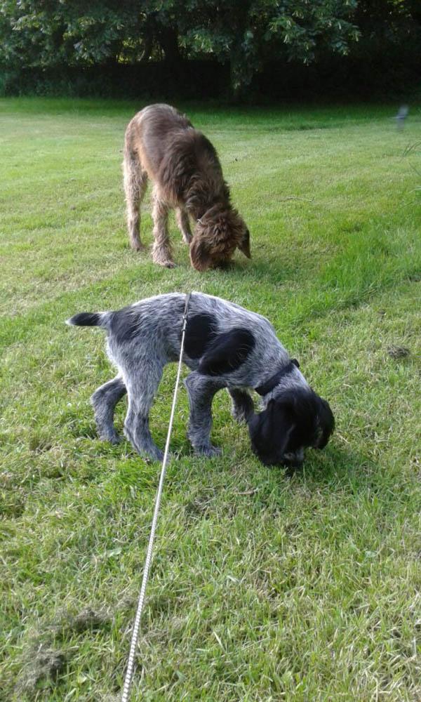 Neuer Hund Caya ist eingezogen